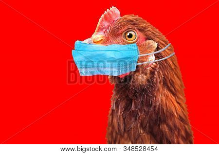 Bird Flu H5n1 In China Concept With Chicken Portrait And Medical Protective Mask.