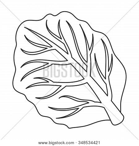 Leaf Of Cabbage Vector Icon.outline, Line Vector Icon Isolated On White Background Leaf Of Cabbage .