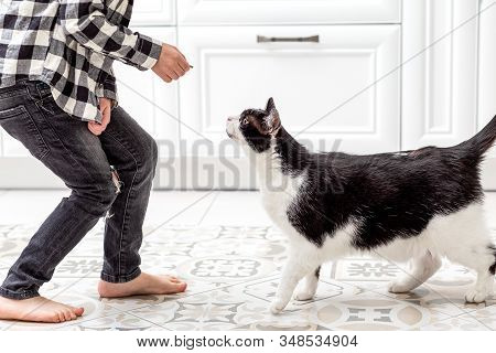 Boy Feeds Cat Food At Home. Black And White