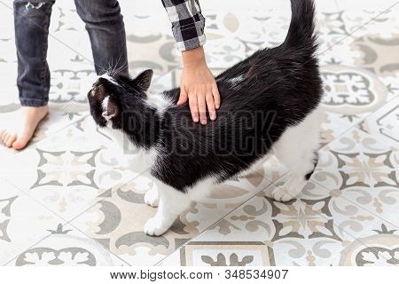 Boy Stroking Black And White Cat At Home. Emotion