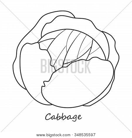 Cabbage Vector Icon.outline, Line Vector Icon Isolated On White Background Cabbage .