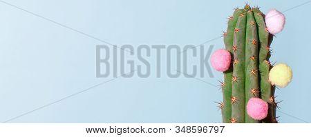Cactus On Blue. Art Gallery Fashion Design. Minimal Stillife. Concept With Fluffy Colorful Balls, De