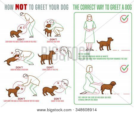 Dog And People Behavior Horizontal Poster. Correct Way To Greet A Dog. Domestic Animal Or Pet Langua