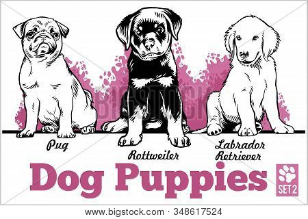 Pug, Rottweiler And Labrador Retriever - Dog Puppies. Vector Set. Funny Dogs Puppy Pet Characters Di