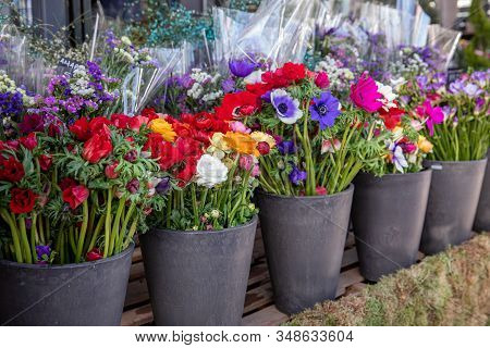 Everyday Flowers Counter With Variety Of Fresh Cut Flowers Such As Persian Buttercups, Anemone Coron