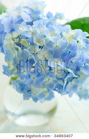 blue flower in vase