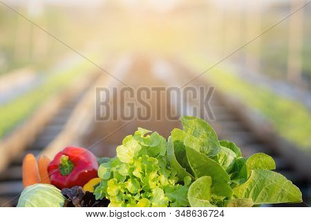 Fresh Organic Raw Vegetable And Fruit In Basket For Salad In Hydroponic Farm, Vegetarian And Healthy