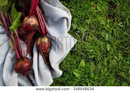 Pile Of Homegrown Fresh Organic Beets With Leaves On Green Grass Close-up With Copy Space.local Prod