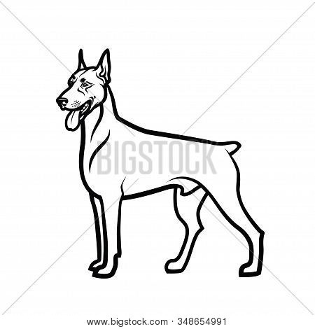 Doberman Pinscher - Isolated Outlined Vector Illustration