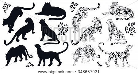 Set Of Black-white Leopards And Black Silhouettes. Vector Hand-drawn Design On The White Background.