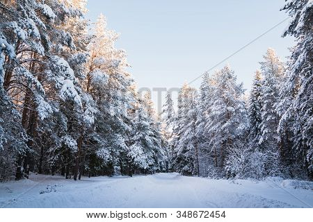 Beautiful Winter Scenery With Forest Full Of Trees Covered Snow