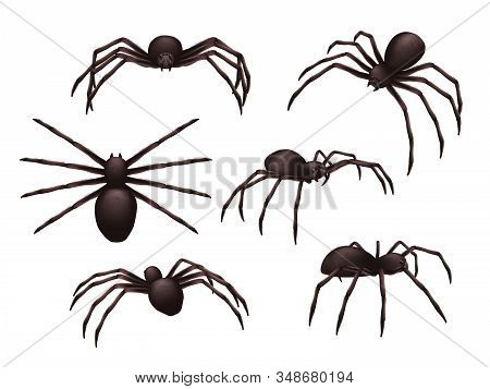 Insects Realistic. Spider Danger Venom Horror Poisonous Black Symbols Vector Set. Illustration Spide