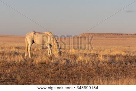 A Wild Horse Stallion In The Utah Desert In Fall