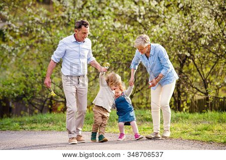 Senior Grandparents With Toddler Grandchildren Walking In Nature In Spring.