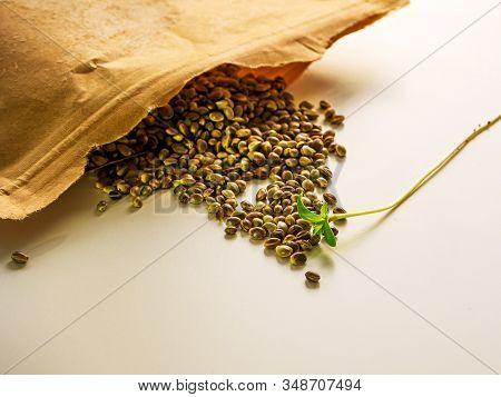 Seeds On The White Surface. Cannabis, Marijuana, Legal Light Drugs Prescribe, Alternative Remedy. He