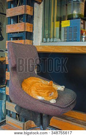 Kadikoy Street Cat 2