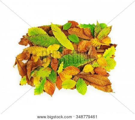 Mixed autumn leaves in a pile