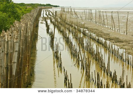 Bamboo Dam And Mangrove Farm