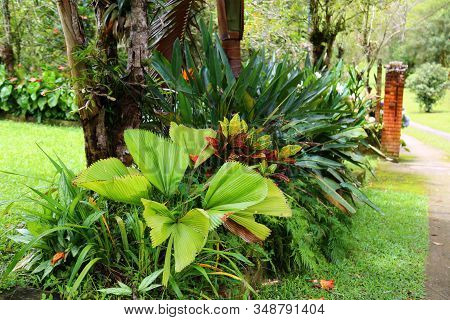 Tropical Garden With Palm Trees, Flowers And Varied Vegetation. Grass And A Cement Path In The Backg