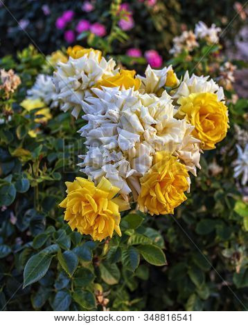 Yellow And White Flowers On A Colorful Background