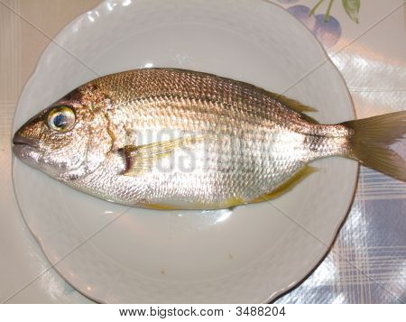 Fresh trapped fish (Pagellus Erythrinus) ready for cooking or baking. poster
