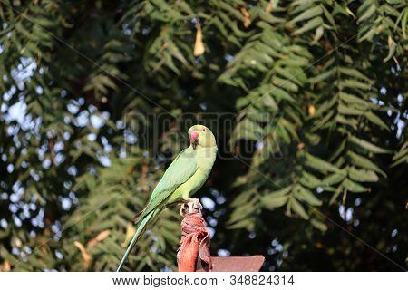 A Parrot Bird Resting On Iron Rod , Outdoors  Parrot Birds, Green Parrot Bird, Photography Of Parrot