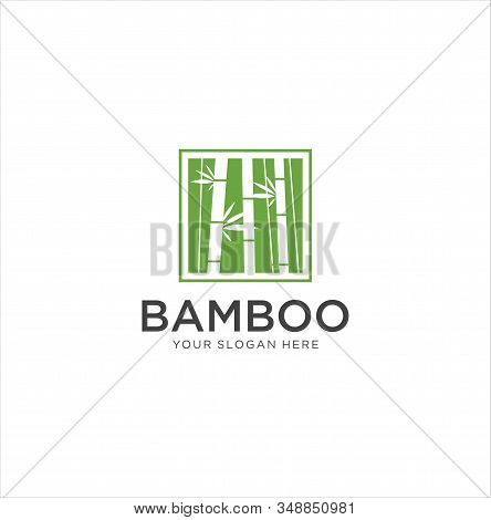 Bamboo Square Logo . Green Bamboo Trees Vector Design. Bamboo Stem Logotype