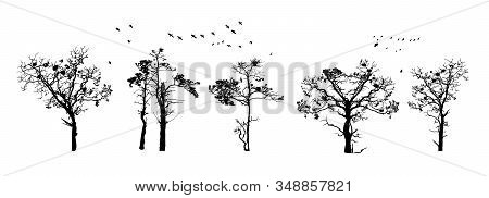 Tree Silhouettes Isolated On White Background. Realistic Set Of Trees Silhouette. Black Shape. Outli