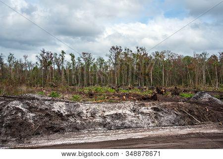 The Deforestation Of Land For Development In Florida.