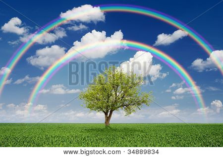 Lonely tree in a field with a rainbow