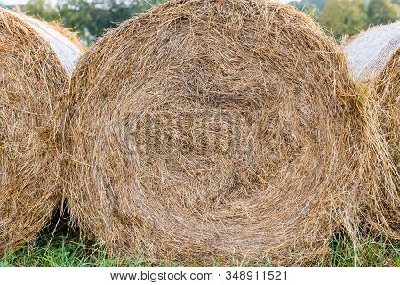 Rural Landscape Field Meadow With Hay Bales After Harvest. Hay Roll Bales On Countryside Field. End