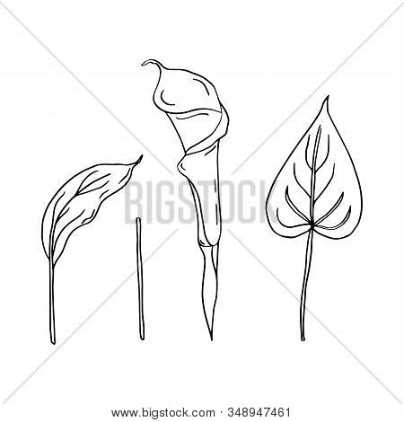 Calla Set Of Contour Drawings.calla Flower And Leaves.black And White Image.beautiful Flowers.flower
