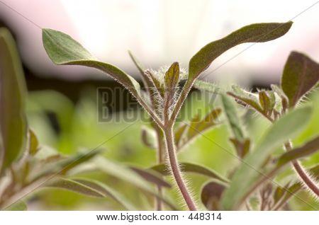 Gardening - Tomato Seedlings