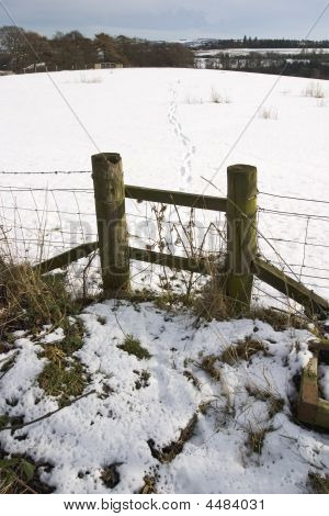 Footprints In A Field Fresh Snow