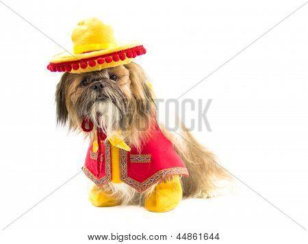 Gaucho Dog
