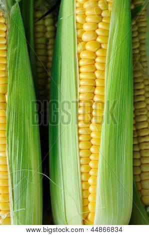 Corn Sweetcorn