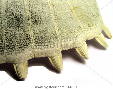 close up of a turtle shell bone poster