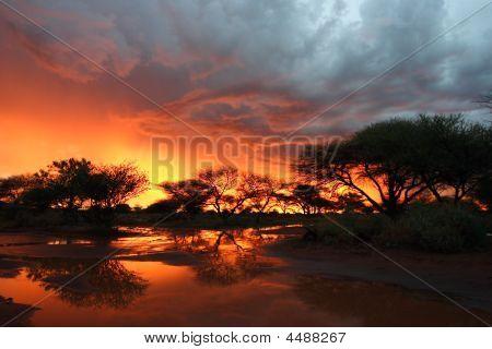 Kalahari Thunderstorm At Sunset With Camelthorn Trees