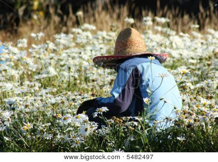 Worker In Field Of Daisies
