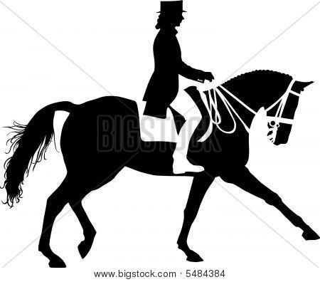 Equestrian Dressage Horse