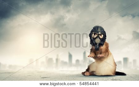 Image of ferret in gas mask. Ecology concept