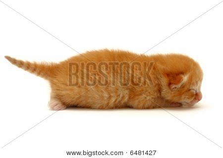 Kitten On The Floor Isolated On White