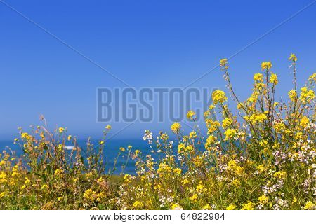 California Pigeon point spring flowers in Cabrillo Hwy coastal highway State Route 1