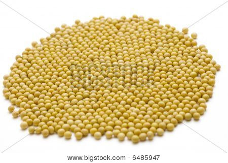 soybeans with white backgrounds