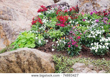 Flowers Landscape