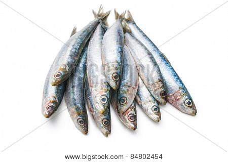 Fresh raw European pilchard isolated  on white background