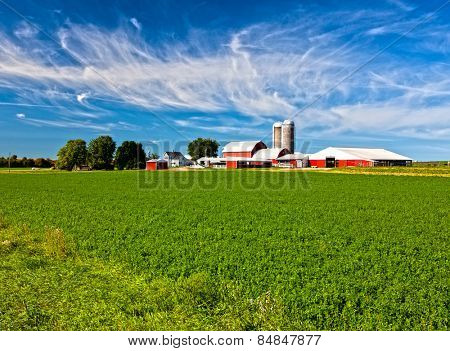 American Country Farm with soybean plants and blue sky