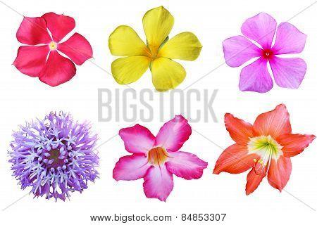 Tropical Flower Set