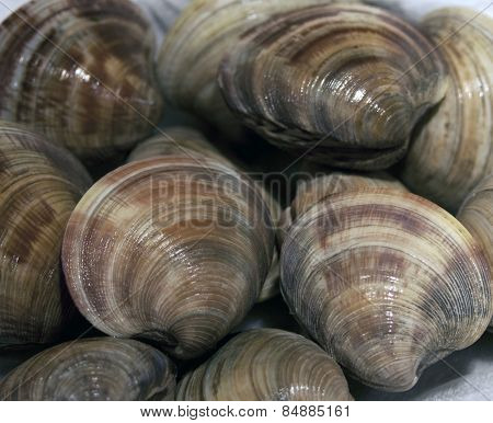 Freshly Caught Clams
