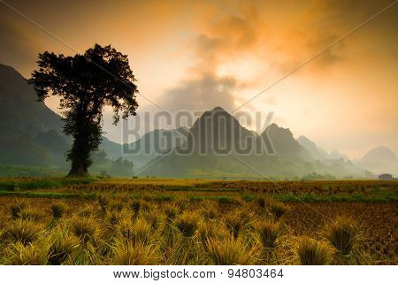Rice field in sunrise in Cao Bang, Vietnam.